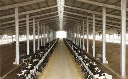 Dự án nông nghiệp vay nghìn tỷ: Nhà băng nào dám mở hầu bao?