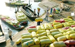 Tạm trữ có cứu được giá gạo?