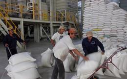 Vĩnh Long, An Giang sắp đạt chỉ tiêu mua tạm trữ lúa gạo