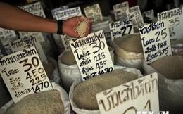 Gạo có đợt giảm giá hàng tuần lâu nhất kể từ năm 2008