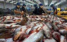 Không hoãn thi hành Nghị định 36 về cá tra