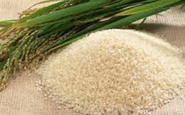 """Xuất khẩu gạo Việt Nam """"ghi bàn"""" nhờ giá thấp nhất"""