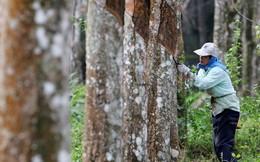 Thái Lan và Malaysia ủng hộ Indonesia thiết lập giá sàn cao su