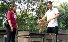 Thành tỷ phú nhờ nuôi ong