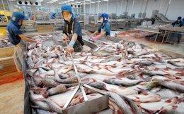 Ngành cá tra cần tiếp tục được vay vốn tín dụng xuất khẩu để vượt qua khó khăn