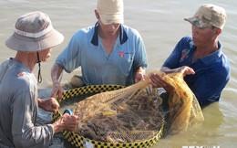 Tìm kiếm và mở rộng thị trường xuất khẩu tôm Việt Nam