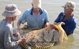 Tôm chết diện rộng ở Tây Nam Bộ, thiệt hại hàng trăm tỷ đồng