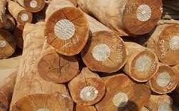 Từ 8/12/2014, tạm ngừng tạm nhập, tái xuất một số loại gỗ từ Lào, Campuchia