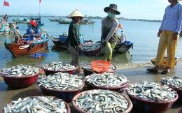 Xuất khẩu thủy sản sang EU cần tăng cường kiểm soát dư lượng kháng sinh