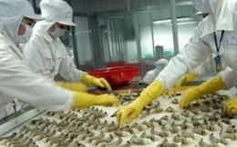 WTO đưa phán quyết có lợi cho tôm Việt Nam