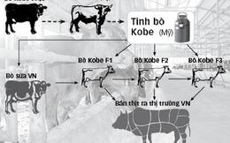 Ông Đặng Văn Thành lên Lâm Đồng nuôi bò 'biết uống bia, nghe nhạc'