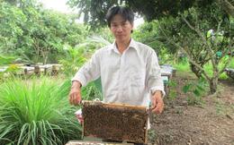 Nuôi ong Italy, thu lãi 30 triệu đồng/tháng