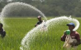 Sản lượng phân Urê nhập khẩu giảm 16%