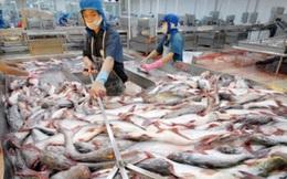 Tiêu thụ hàng tồn cá tra: Đề xuất Chính phủ gia hạn đến hết năm 2015