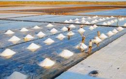 Năm 2015, cả nước sẽ thiếu khoảng 300.000 tấn muối