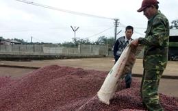 Cà phê có chứng nhận quốc tế: Nhiều chưa chắc đã hay