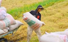 """Năm 2015, xuất khẩu gạo Việt Nam khó khăn """"chồng chất"""""""