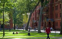 Tại sao không cần cố để thuê sinh viên tốt nghiệp Harvard?