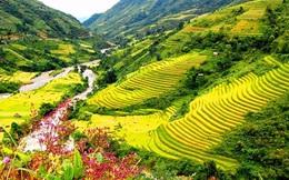 Ruộng bậc thang Sa Pa lọt top địa danh đẹp nhất hành tinh