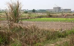 Đốt tiền, chôn chân ở vùng đất mới Mê Linh