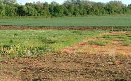 Điều kiện nhận chuyển nhượng đất trồng lúa