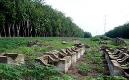 Thu hồi quyết định đầu tư khu công nghiệp Sài Gòn-Bình Phước