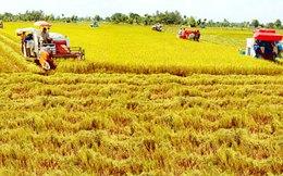 Thủ tướng: ĐBSCL phải trở thành vùng sản xuất nông sản hiện đại