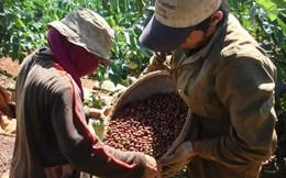 Các Công ty con của Vinacafe: Người lao động bị quản lý cả... đất ở