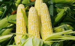 Đức Long Gia Lai rót 360 tỷ đồng thành lập công ty nông nghiệp