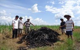 Tây Ninh: Bị công ty mía đường ép giá, người trồng mía khốn đốn