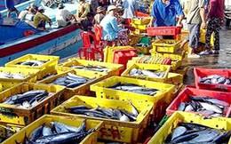 Vốn dưới 800 tỷ đồng không được bảo hiểm phát triển thủy sản