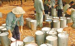 Cao su Tây Ninh: Điều chỉnh giảm sâu kế hoạch kinh doanh 2014