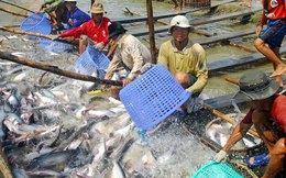 Thủy sản Hùng Vương tiếp tục đăng ký mua 2 triệu cổ phiếu VTF