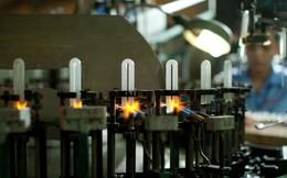 Bóng đèn phích nước Rạng Đông nâng cổ tức năm 2013 lên 35%