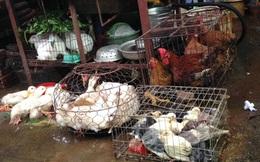 Hà Nội: Giá thịt gà tăng 3 lần chỉ trong một tuần do khan nguồn cung