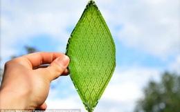 Lá cây nhân tạo: Phát minh biến đổi cuộc sống của con người