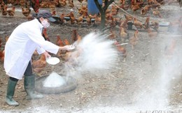 Phát hiện virus cúm A/H5N6 trên động vật ở Lạng Sơn và Hà Tĩnh
