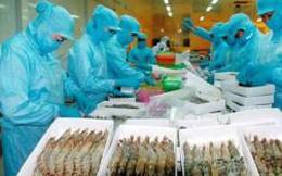 Mỹ bắt đầu thẩm tra DN xuất khẩu tôm Việt Nam