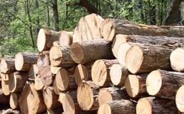 Nhập khẩu gỗ nguyên liệu từ Campuchia không cần Giấy phép từ Bộ Công thương