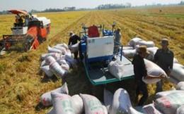 Xuất khẩu gạo 2014 và chuyện tạm trữ