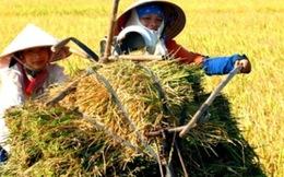 """Nông nghiệp Việt Nam đang """"tự giẫm chân mình"""""""