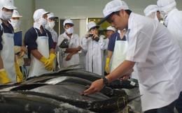 Đấu giá lô cá ngừ đầu tiên của Việt Nam xuất sang Nhật Bản