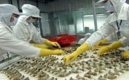 Giải pháp nào để giảm thiệt hại cho ngành tôm?