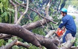 Bảo hiểm cho cây xanh - Liệu có khả thi?