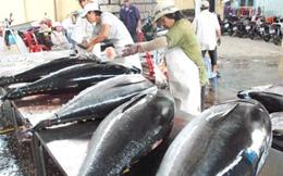 Vasep đề xuất thuế nhập khẩu cá ngừ còn 0%