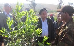 """Phát triển mắc ca ở Việt Nam: Cây """"tỉ đô"""" sắp thành hiện thực?"""