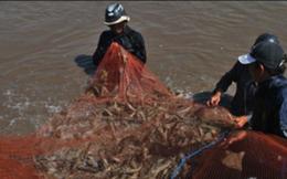 Thủy sản Bạc Liêu đang tính chuyện sản xuất nước chấm độ đạm cao