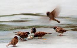 TTCK tháng 5: Chiến lược chim sẻ nhặt thóc?