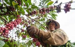 Cà phê Việt Nam hấp dẫn nhà đầu tư nước ngoài