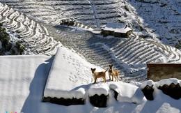 Ba ngày tuyết rơi kiếm được 10 triệu đồng